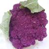 紫カリフラワー.jpg